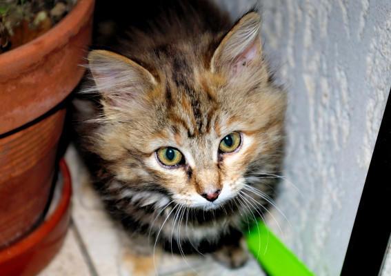 Photographie d'un jeune chat.